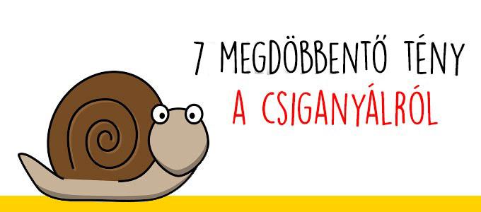 7 megdöbbentő tény  csiganyálról - csigagél